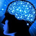 neuroriqueza